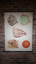 More details for vintage 1950s anatomical wall chart deutsches hygiene museum dresden