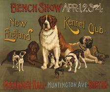 Dogs St. Bernard Yorkie Spaniel Jack Russell Mastiff Poster Repo Free S/H
