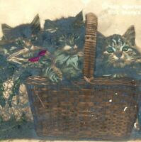 1912 Cute Colored Basket of Kittens Adorable Real Photo Cat Postcard RPPC EAS A4