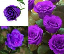 100pcs Rare Beautiful Rose Flower Seeds Home Garden Plants Decor Gift PT114
