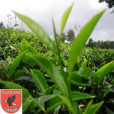 100g Ceylon BOP TEA (Broken Orange Pekoe) Schwarzer Hochland Tee Feinschnitt