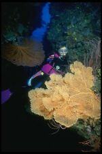 156057 Sea Fans Sea Whips And Soft Corals A4 Photo Print