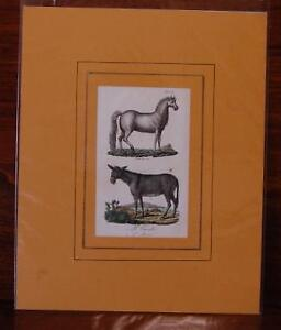 Il Cavallo, Incisione originale colorata a mano d'epoca., Buffon