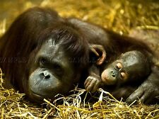 ORANGUTAN MOTHER BABY APE PHOTO ART PRINT POSTER PICTURE BMP085A