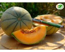 Melon Cantaloup Charentais ( 50 semillas ) seeds - Melón