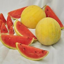 Yellow Watermelon Seeds - Sunzedar - Organically Grown Russian Heirloom NON GMO
