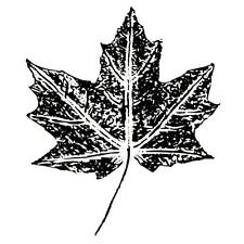 MAPLE LEAF unmounted rubber stamp, summer, Autumn, fall, Canada #1
