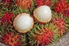 *UNCLE CHAN* 5 SEED Rambutan Sweet Red Fruit Tropical Fruit Plant Outdoor Fresh
