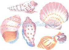 Ceramic Decals Pastel Seashells Sea Shell 5 Designs 5 inch