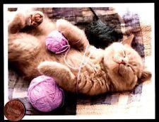 Happy Kitten Cat Sleeping Napping Yarn Balls- Small Blank Greeting Note Card New