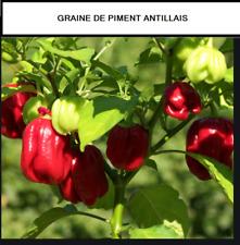 GRAINE DE PIMENT ANTILLAIS BIO 3 GRAINES