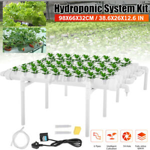 Apofly 50 STK Soilless Hydroponik Schw/ämme Gem/üseanbau System Pflanzen von Gartenwerkzeugen Indoor Hydroponische Samen Starter Kit f/ür Net Cup T/öpfe