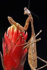 Mind Blowing Praying Mantis Close up Journal : 150 Page Lined Journals by.