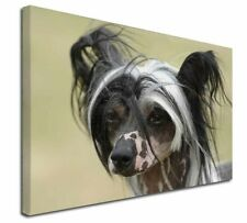 "Chinese Crested Dog 30""x20"" Wall Art Canvas, Extra Large Picture , AD-CHC2-C3020"