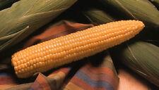 50 Corn Seeds Honey Select Sweet Corn