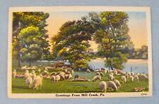 Greetings From Mill Creek PA Pennsylvania Herd Flock Of Sheep Postcard Color (O)