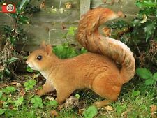 A LIFE SIZE RED SQUIRREL, LOVELY HOME & GARDEN ORNAMENT. ULTRA REALISTIC