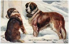 CHIENS. DOGS. SAINT BERNARD. COLLIER TONNEAU. OILETTE.