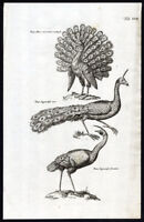 Antique Print-BIRDS-JAPANESE PEACOCK-PEAFOWL-Jonston-Merian-1657