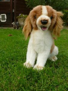 Very unusual small Hansa dog