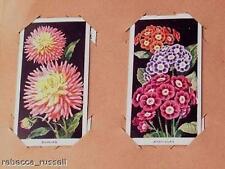 More details for cigarette card album flowers c1936 carrera 49 of 50