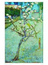 Blossoming Pear Tree - Vincent Van Gogh - Fine Art Giclee Print (Various Sizes)