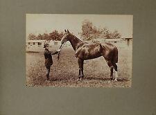 Albuminé 16,5x24 cm : Superbe Pur Sang et son palfrenier , champ de course