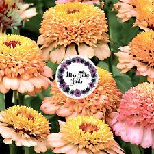 Zinnien ZINDERELLA PEACHY PINK 50 Blumensamen mit gefüllten Blüten Pastel Farben