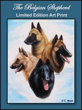 Belgian Shepherd Dog Sheepdog Malinios Laeken Tervuren Limited Edition Art Print