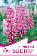 1 Pack 15 Lupine Seeds Lupiuns Polyphyllus Lindl Pink Lupine Garden Flowers A238
