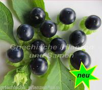JAL-Tomate BLAU!!!! * 10 Samen * exotisch SEHR SELTEN Tomaten für Balkon schwarz