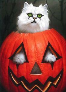 Avanti funny greeting card Halloween kitten cat pumpkin