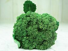 25+ BROCCOLI Seeds | NON-GMO | Fresh Vegetable Garden US SELLER