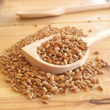 Organic Raw Whole Wheat Grain -for COOKING, SPROUTING, GRINDING 250g 500g 1kg