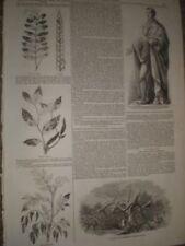 Woodcut/Block Antique (Pre-1900) Natural History Art Prints