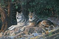 Resting Point Wolves~Digital Panel 28'' x 44'' Cotton Fabric by Northcott