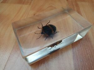 SHIELD BUG TAXIDERMY GLASS BLOCK REAL LIFE BUGS & INSECTS COLLECTION