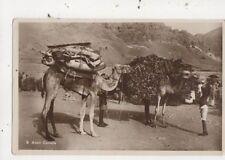 Aden Camels Vintage RP Postcard 970a