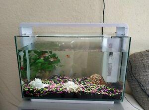 Superfish home 60
