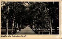 Bad Sulza Thüringen Postkarte ~1920/30 Partie in der Birkenallee im Kurpark