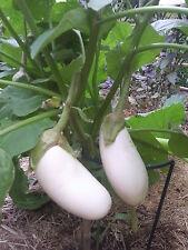 VEGETABLE  AUBERGINE  WHITE  CASPER  150 FINEST SEEDS