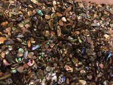 Quantity of Satin Tumbled NZ Paua Shell Pieces -  Small
