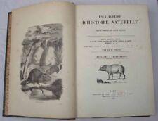 Encyclopédie Histoire Naturelle Rongeurs, Pachydermes, Ruminants, Cétacés Chenu