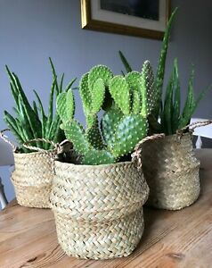 Hand Made Seagrass Belly Plant Basket Pot Foldable Home Decor Pot Cover