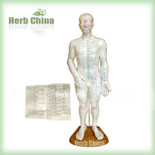 Acupuncture meridian and acupoint Human Body Model (48cm) with Booklet