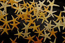 Natural Starfish, 15 broken small, Sea Shells, Beach Seashells. Craft, display