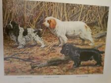 Louis A Fuertes Cocker Clumber Field Spaniel bookplate 1919 National Geographic