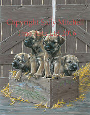 Border Terrier Pups Ltd Edt Print by P Doyle - Won't be beaten on price DOYG-135