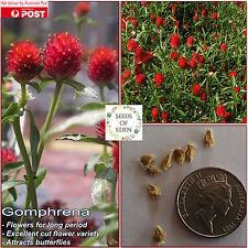 """15 GOMPHRENA """"Strawberry Fields"""" Seeds(Gomphrena haageana); Attracts butterflies"""