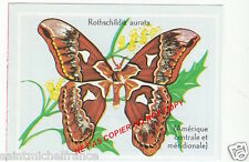 PAPILLON INSECTE BUTTERFLY LEPIDOPTERE ROTHSCHILDIA AURATA Saturniidae ANNEE 60s